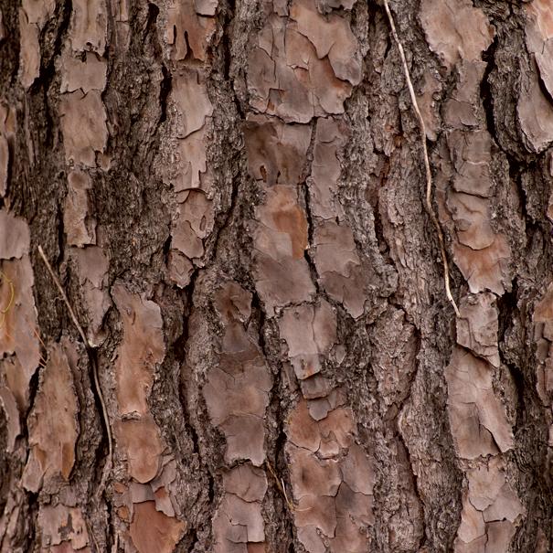 oligopin-pine-bark-extract
