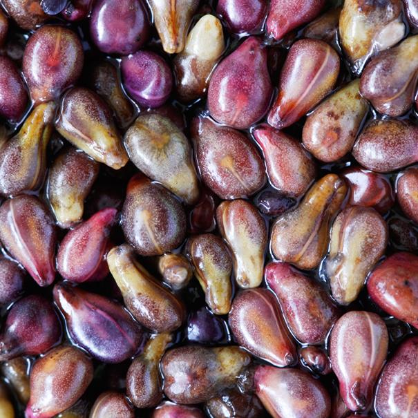 vitaflavin-grape-seed-extract